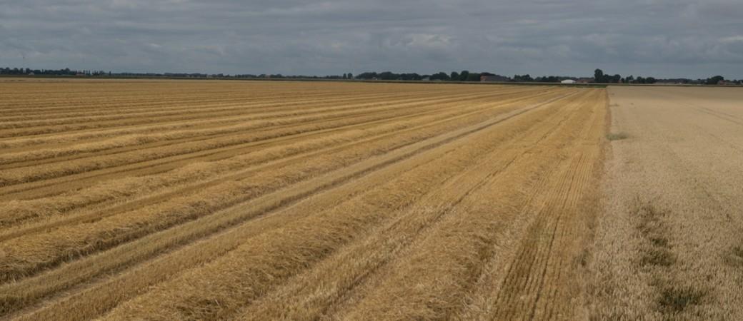 zur Hälfte geerntetes Getreidefeld